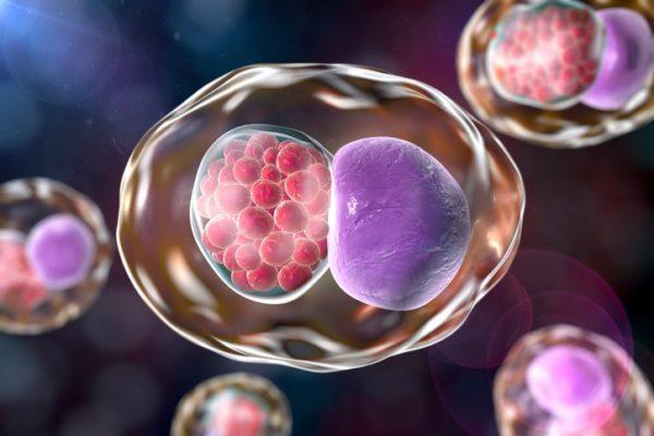 Como afecta la clamidia al embarazo enfermedad de transmision sexual