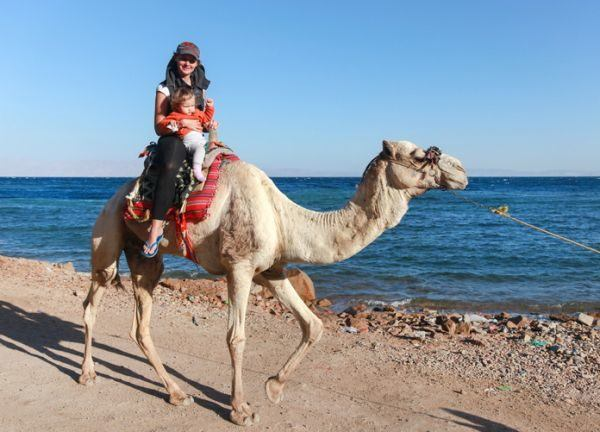 nombres-egipcios-para-bebe-camello-istock