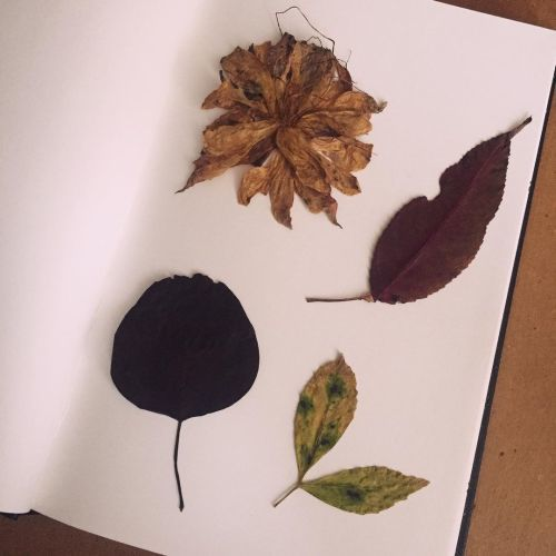 Collage de hojas otoñales