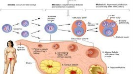 Infertilidad femenina| investigaciones