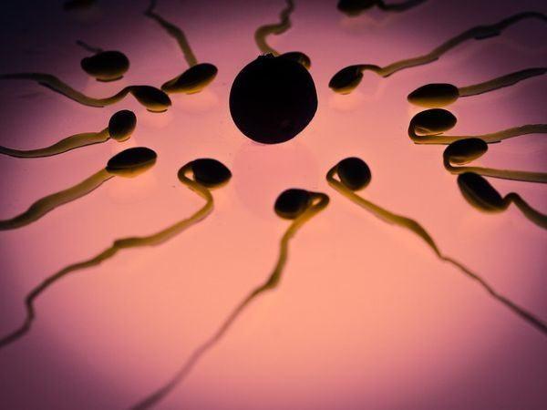 ovulacion-y-embarazo-esperma
