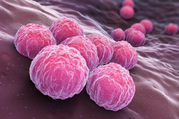 Sintomas de las clamidias durante el embarazo bacteria