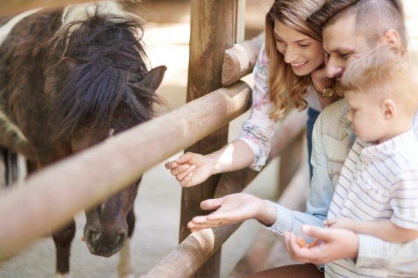 10 planes para hacer con nuestros hijos en vacaciones animales