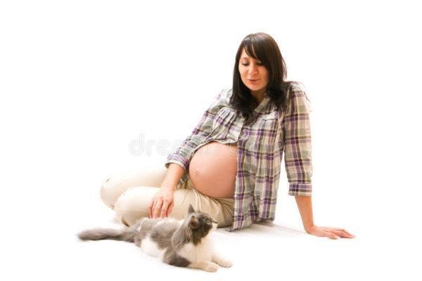 Embarazo y gatos toxoplasmosis peligro