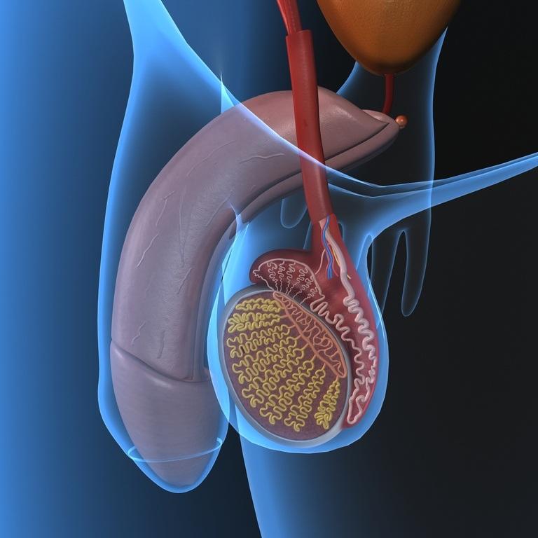 Varicocele: qué es, causas, síntomas y tratamiento - Embarazo10.com