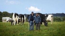 La importancia de los productos lácteos