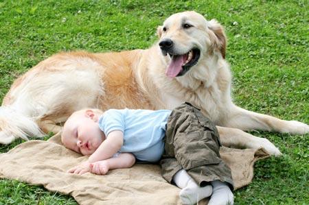 bebe-perro-mascota