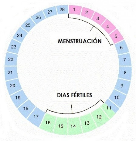calendario-de-fertilidad-como-funciona
