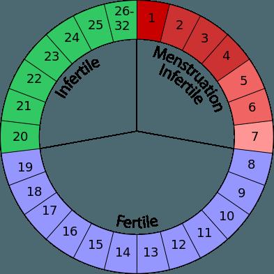 como-funcionan-calculadoras-de-ovulacion