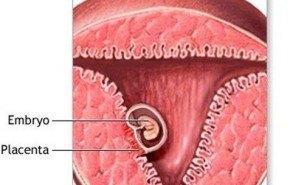 Progesterona embarazo