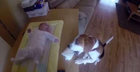 hacer-que-un-perro-te-ayude-a-cambiar-los-panales-del-bebe