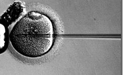 Fecundacion In Vitro | la presencia de PCBs afecta los resultados