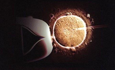 in-vitro-photo