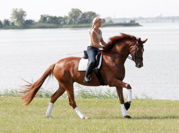 montar-a-caballo-durante-el-embarazo