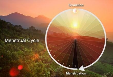 ovulación, ciclo menstrual