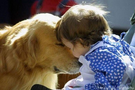 pets-and-babies-4