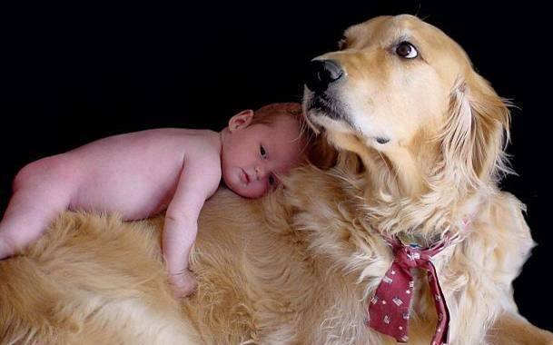 pets-and-babies-8 - Lasting friendships start early, Part 2 - Inspiration & Hope