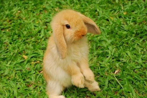 pruebas-caseras-de-embarazo-conejo