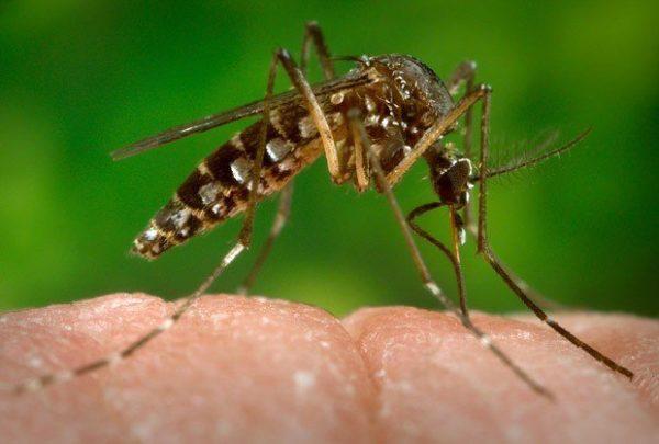 que-es-el-virus-zika-como-afecta-a-las-embarazadas